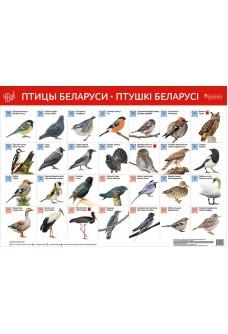 Птицы Беларуси. Птушкі Беларусі (интерактивный плакат)