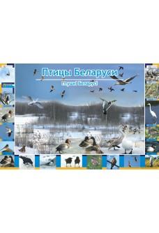Птицы Беларуси. Птушкi Беларусi  (А1). Развивающий фотоплакат