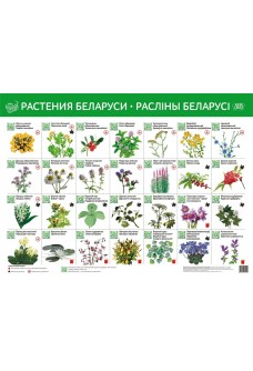 Растения Беларуси. Расліны Беларусі (интерактивный плакат)