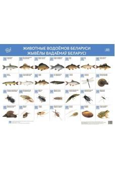 Животные водоёмов Беларуси. Жывёлы вадаёмаў Беларусі (интерактивный плакат)