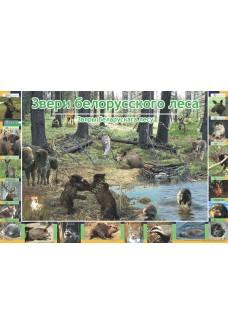 Звери белорусского леса. Звяры беларускага лесу  (А1). Развивающий фотоплакат
